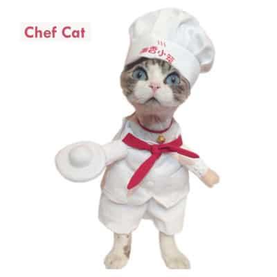 Chef gato. Los disfraces más divertidos para gatos y dónde comprarlos