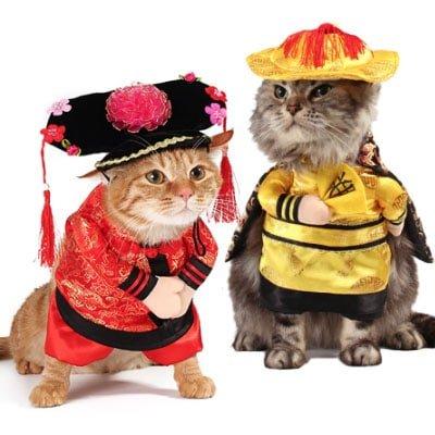 Traje tradicional chino. Los disfraces más divertidos para gatos y dónde comprarlos