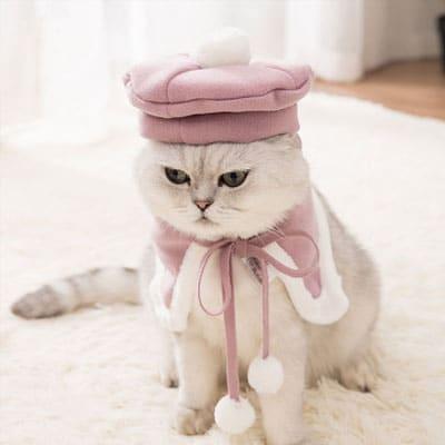 boina colegio gato en color rosa. Los disfraces más divertidos para gatos y dónde comprarlos