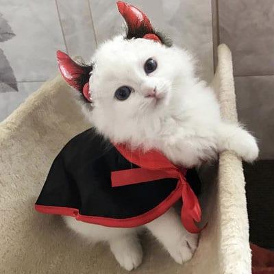 demonio. diablo. satán. Los disfraces más divertidos para gatos y dónde comprarlos