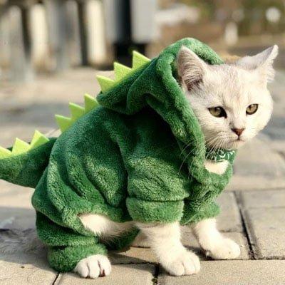gato dragón. Los disfraces más divertidos para gatos y dónde comprarlos