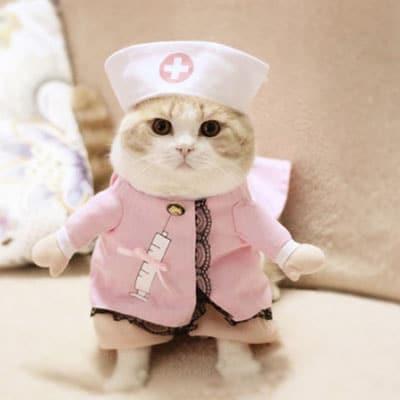 enfermera en color rosa. Los disfraces más divertidos para gatos y dónde comprarlos