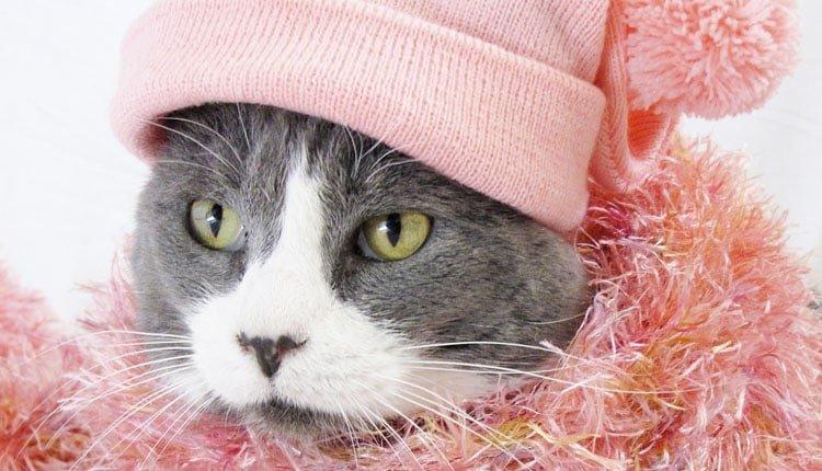 Los 19 disfraces más divertidos para gatos y dónde comprarlos