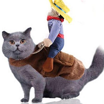 vaquero o jinete para gato. Los disfraces más divertidos para gatos y dónde comprarlos