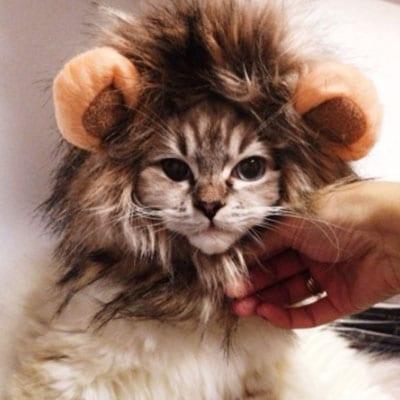 melena de león. Los disfraces más divertidos para gatos y dónde comprarlos