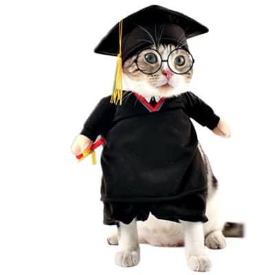 licenciado, profesor o juez. Los disfraces más divertidos para gatos y dónde comprarlos