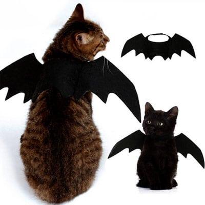 Gato murciélago. Halloween. Los disfraces más divertidos para gatos y dónde comprarlos