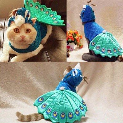 pavo real con sombrero. Los disfraces más divertidos para gatos y dónde comprarlos