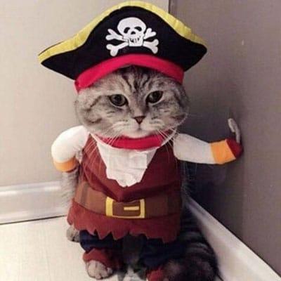 Gato capitán pirata. Los disfraces más divertidos para gatos y dónde comprarlos