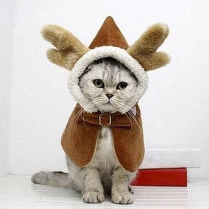 Disfraz de reno para gato. Los 19 disfraces más divertidos para gatos y dónde comprarlos