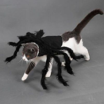 gato araña. Los disfraces más divertidos para gatos y dónde comprarlos