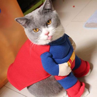 superman. supercat. Los disfraces más divertidos para gatos y dónde comprarlos
