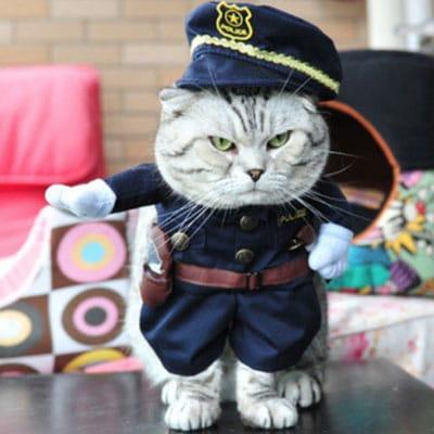 gato policía. Los disfraces más divertidos para gatos y dónde comprarlos
