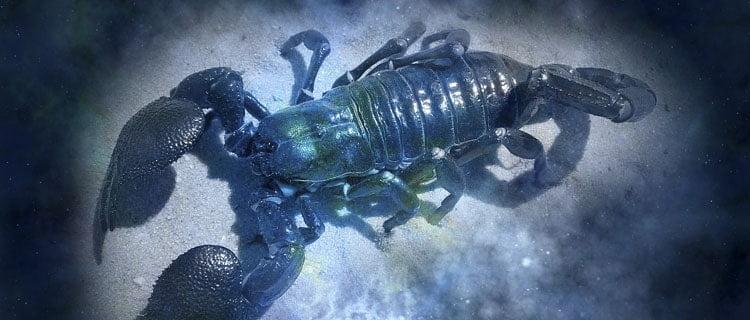 escorpio Horóscopo para Diciembre de 2020