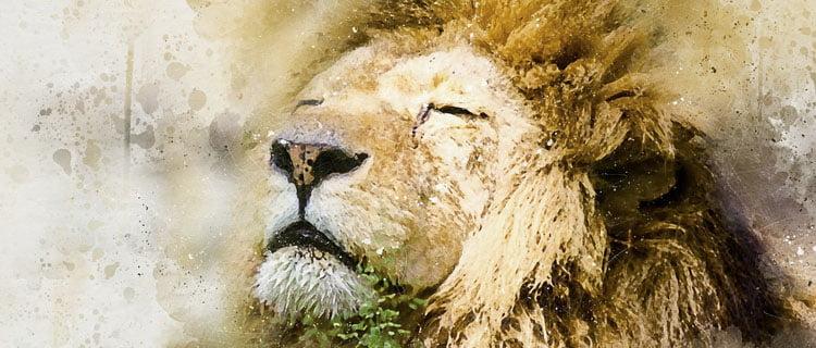 leo, león signo del zodiaco, Horóscopo para Diciembre de 2020